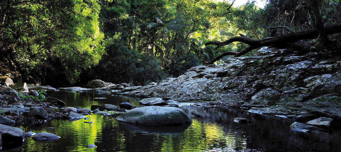 Currumbin Rock Pools Free things to do with kids on the Gold Coast
