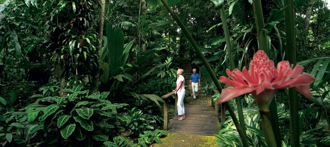 Top 10 things to do in Cairns Cairns botanic gardens