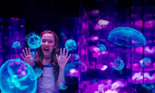 Experience Oz Gold Coast Theme Parks Sea World