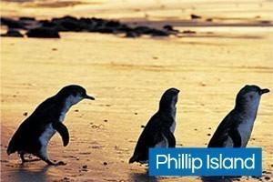 Phillip Island with Kids