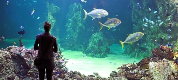 Aquarium Sydney