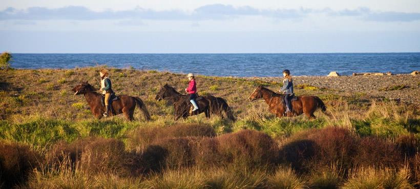 Hawkes Bay Horse Riding