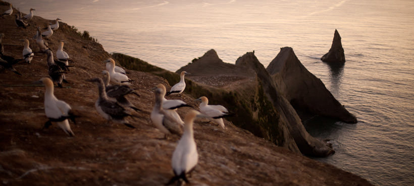 Gannet Safaris to Cape Kidnappers