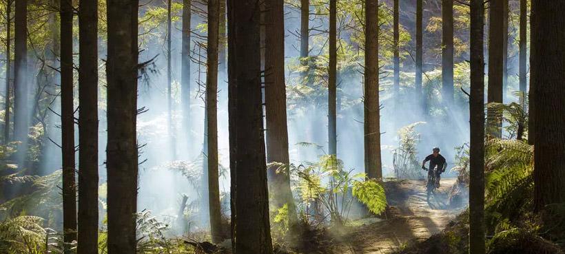The Redwoods at Whakarewarewa Forest