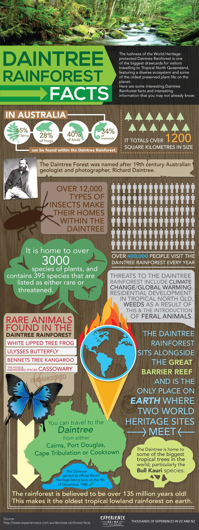 Daintree Rainforest Infographic