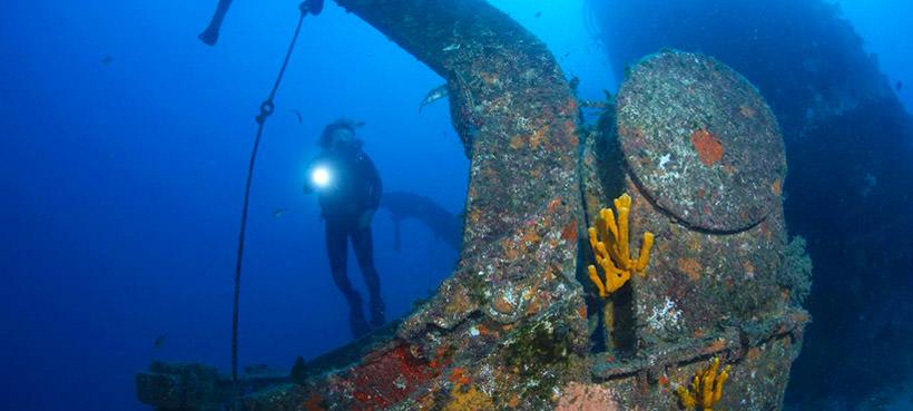 Diving Bay of Islands NZ