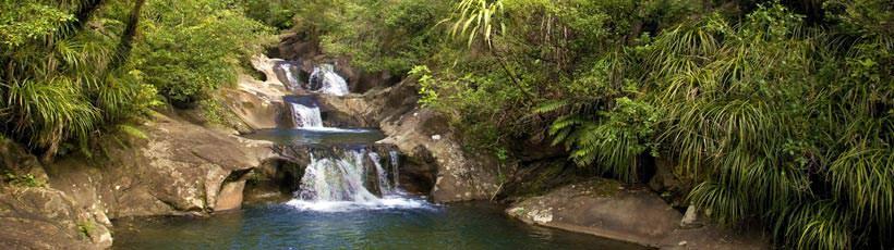 Rapaura Watergardens Coromandel