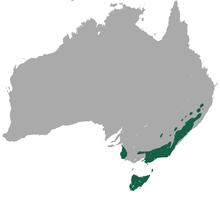 Australian Wombat Map