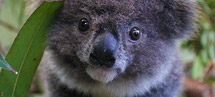 Australia's Cutest Animal