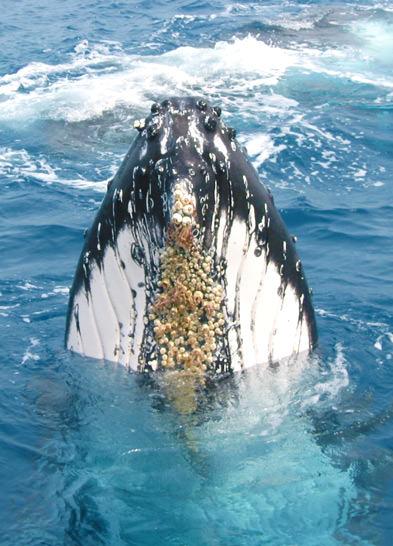 Whale Tile 3