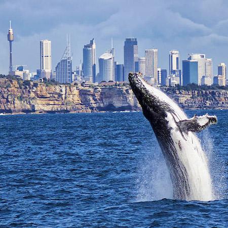 NSW Background