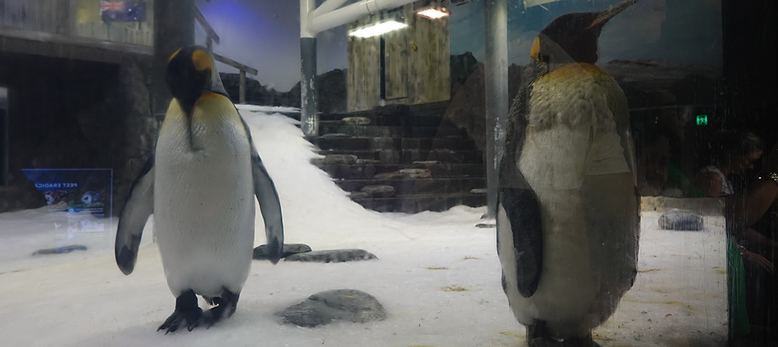 Sydney SEA LIFE Penguin Exhibit