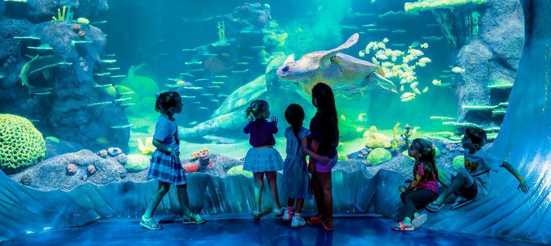 SEA LIFE Great Barrier Reef
