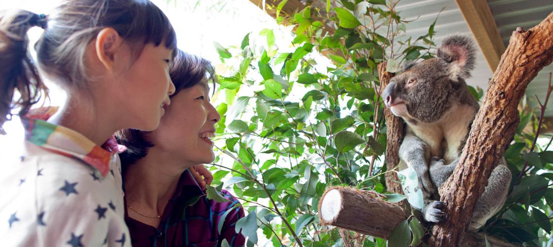 WILD LIFE Sydney Zoo Entry - Buy Vouchers