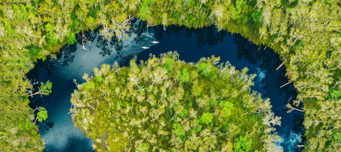 Noosa Everglades Tours