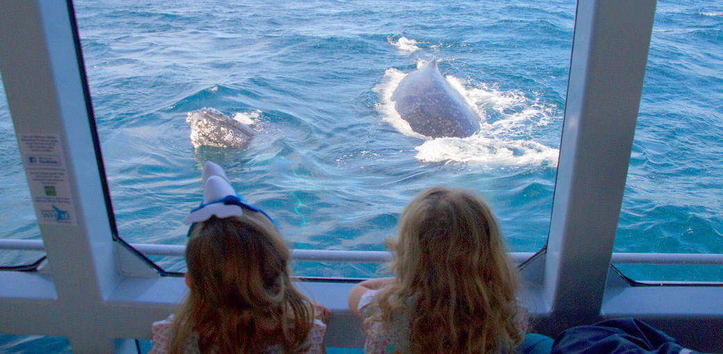 Brisbane Whale Watching Children