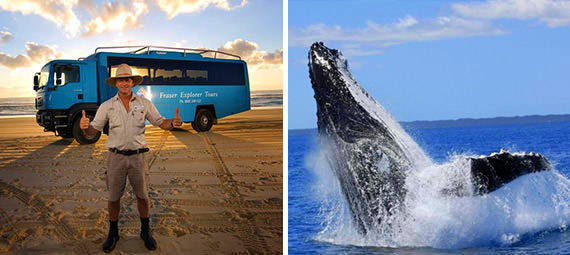 Morning Whale Watch and Fraser Island One Day Tour