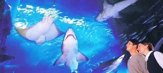 Melbourne Aquarium Tickets