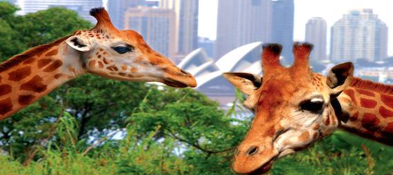 Taronga Zoo and Ferry Package