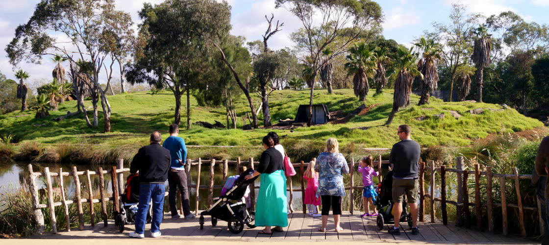 Werribee Open Range Zoo Review