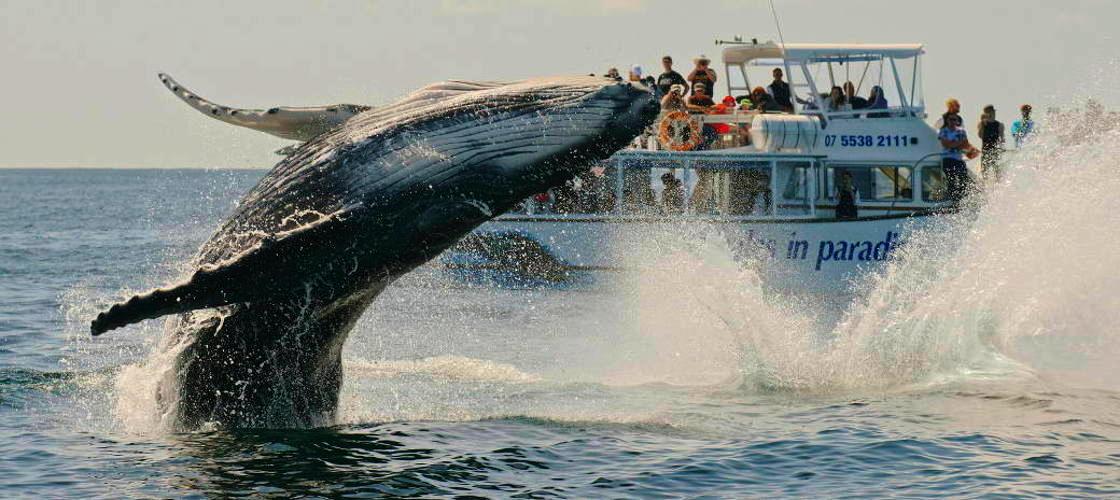 Gold Coast Whale Tours