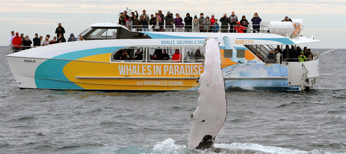 Whale Watch Cruises from Surfers Paradise