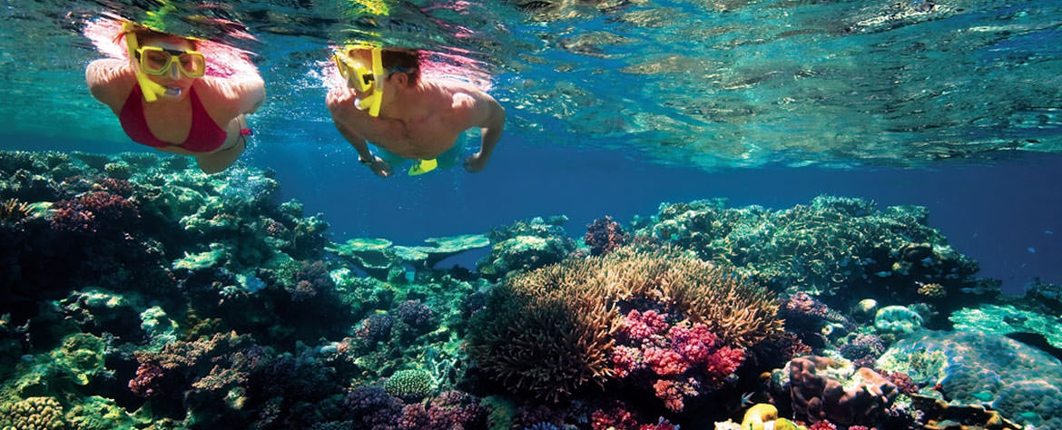 Lady Elliot Island Gold Coast Tours