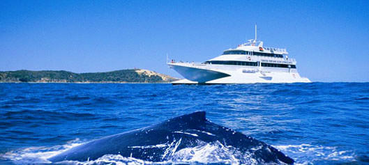 Tangalooma Island Whale Watching
