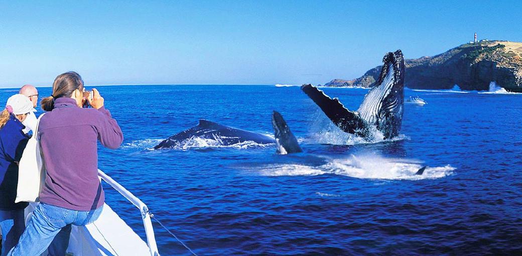 Tangalooma Island Resort Brisbane Whale Watching