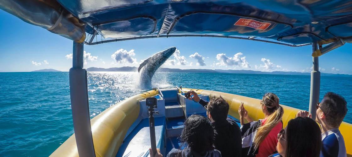 ocean rafting tour whitsundays