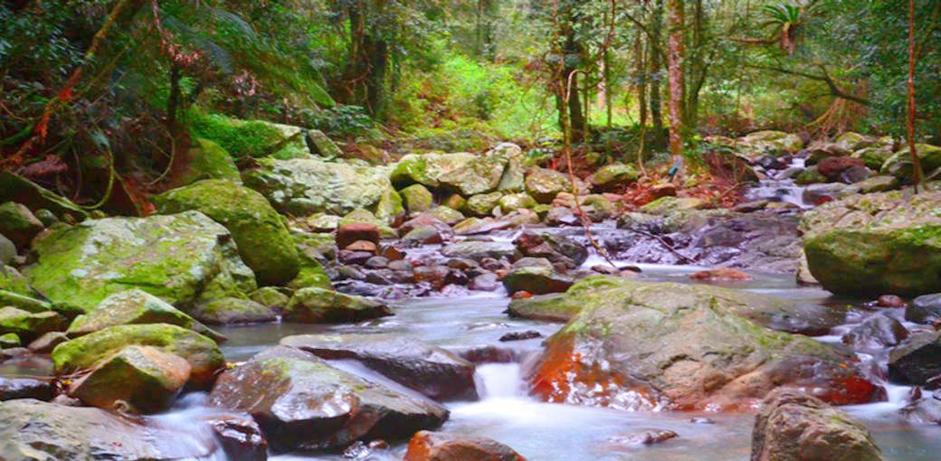 Gold Coast Hinterland Stream