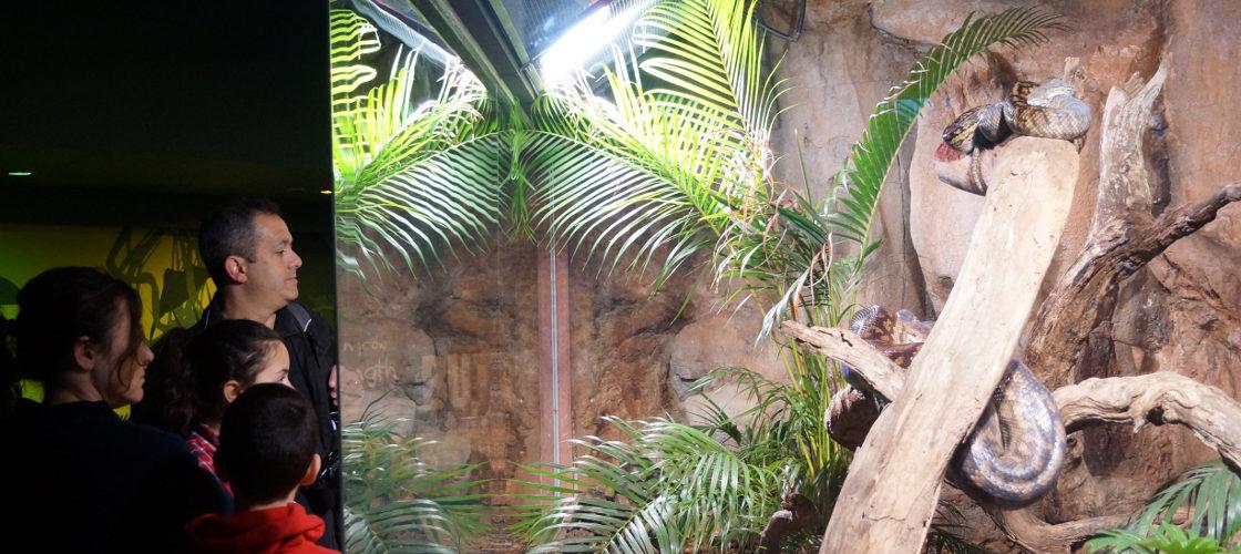 WILD LIFE Sydney Zoo Koala Breakfast Snakes