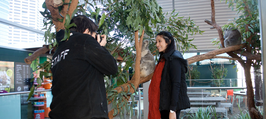 WILD LIFE Sydney Zoo Koala Breakfast