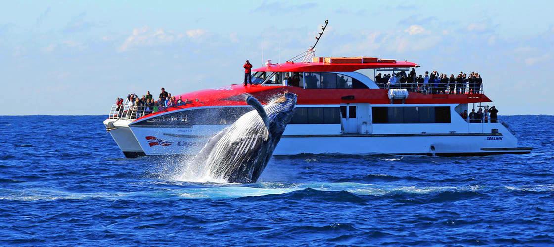 Sydney Whale Tours
