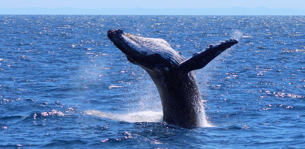 Rottnest Fast Ferries Perth Western Australia Whale Watching Cruise