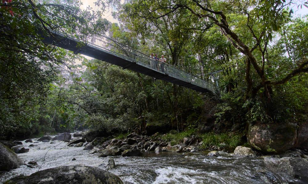 Adventure North Australia  Daintree Dreaming Tour bush walk
