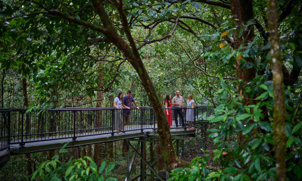 Adventure North Australia  Daintree Dreaming Tour Nature rainforest
