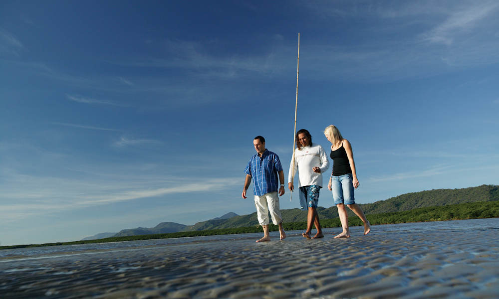 Daintree Dreaming Tour from Port Douglas experience