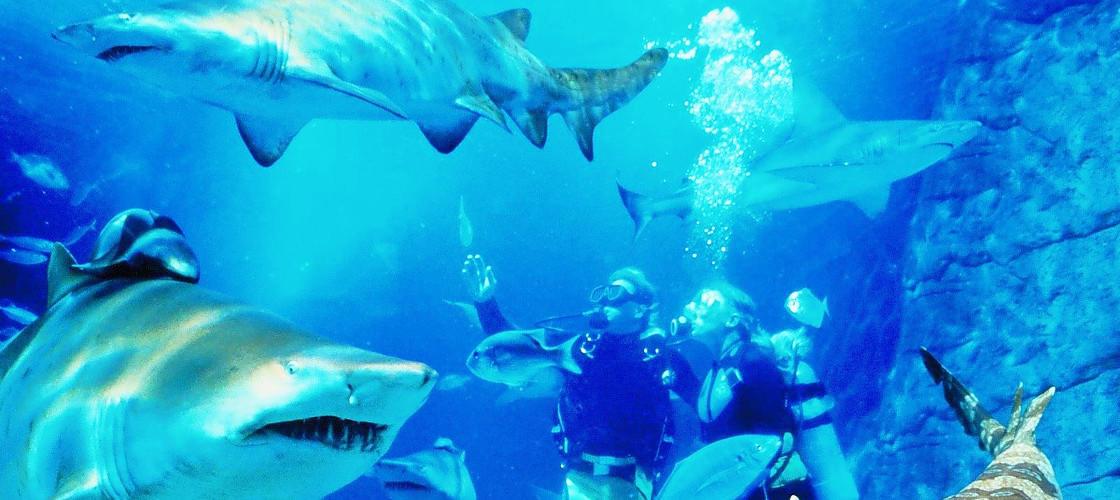 Shark Dive XTreme SEA LIFE Manly Sanctuary