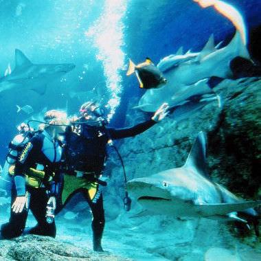 Shark Dive Xtreme at UnderWater World SEA LIFE Mooloolaba