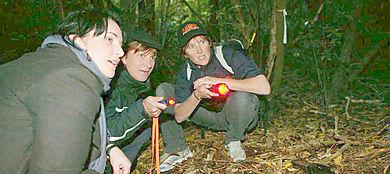 ZEALANDIA Night Kiwi Tour Wellington NZ - Book Now