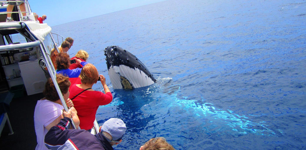 Dunsborough Whale Watching