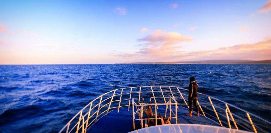 Naturaliste Charters whale watching dunsborough