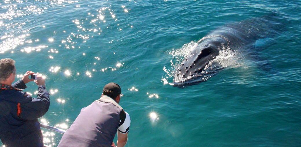 Dunsborough Whale Tours