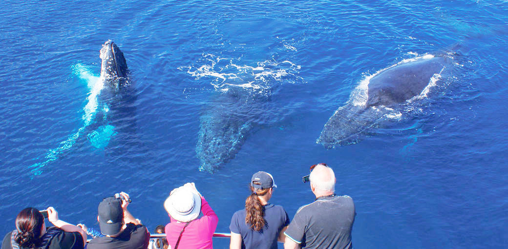 Ocean Eco Adventures Exmouth Whale Watching Cruise