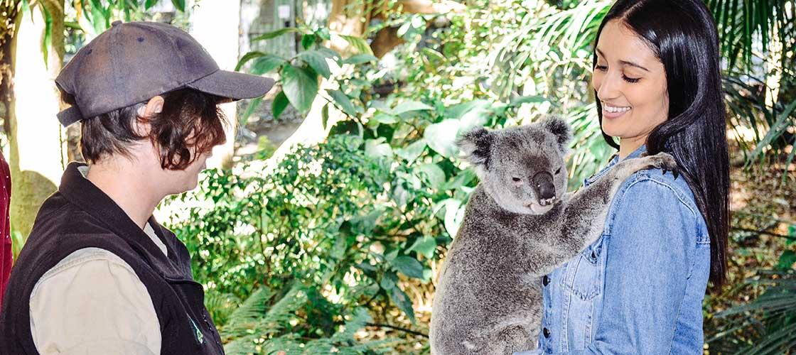 Cuddle a koala lone pine koala sanctuary