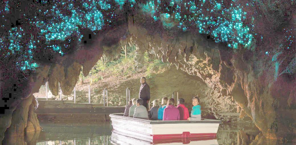 Glow Worm Tour Dunedin