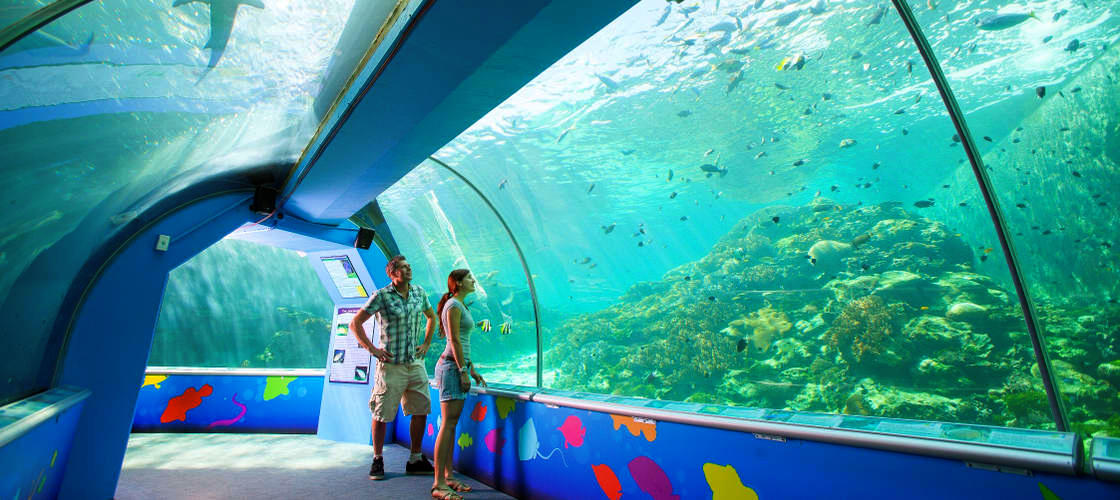 Secured Cards >> Reef HQ Aquarium Townsville Tickets - Buy Now | Experience Oz