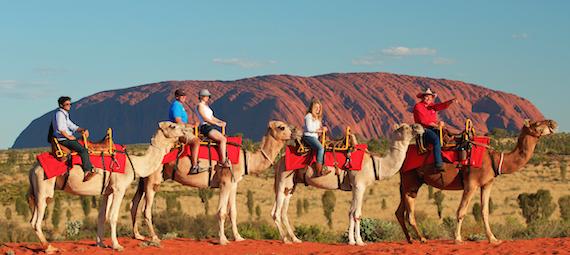 Uluru Camel Ride Express Morning and Afternoon Tours