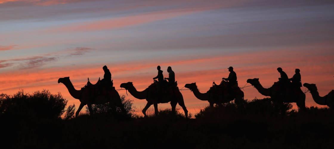 uluru camel tours sunset